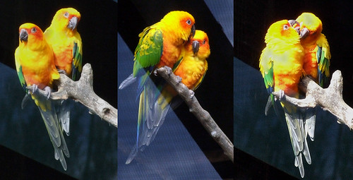 Parrot Who Picked Out All His Feathers Found New Home