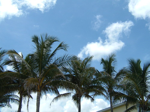 Palm trees at the westin | by stupid clever