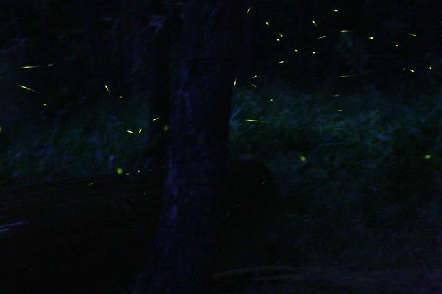 Fireflies 2 Fireflies In Frontenac Park Ted Goldring Flickr
