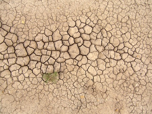 Life from dry earth in Arizona | by synapse