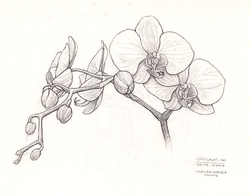 Orchid Line Drawings Orchid Line Drawing