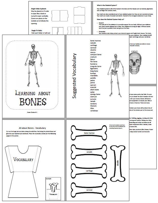 Learning About Bones Skeletal System Interactive Unit Flickr