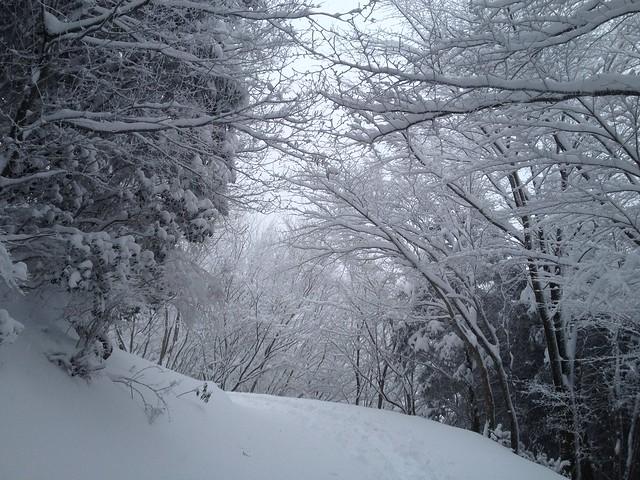 綿向山 登山道