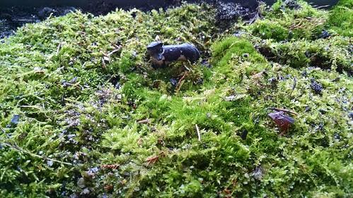 Inside Moss Terrarium