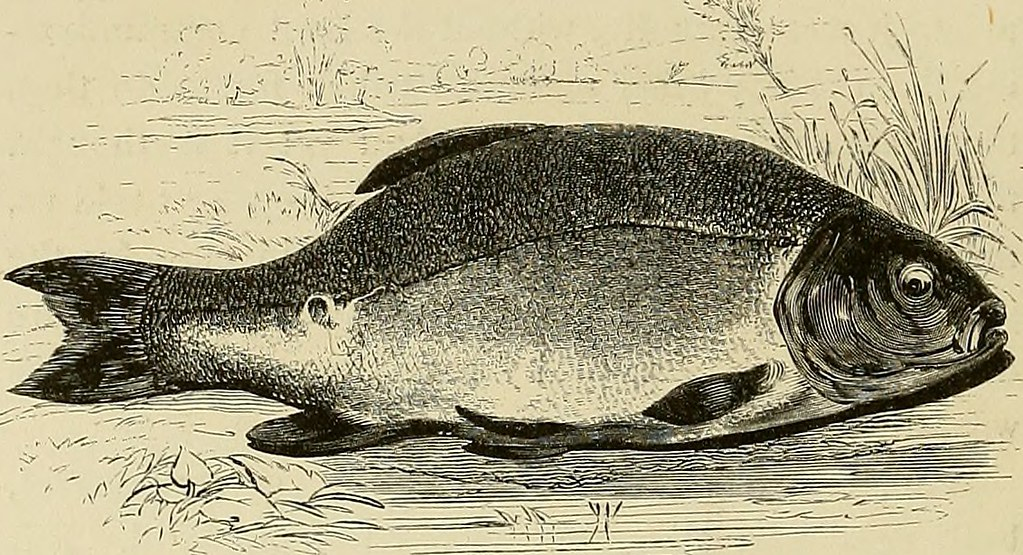 Image From Page 243 Of The Complete Angler Or The Contem Flickr