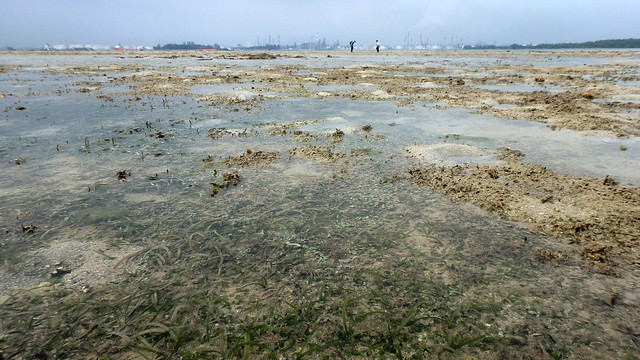 Seagrass meadows on Beting Bemban Besar