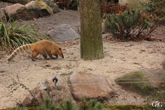 Besuch Zoo Berlin 26.02.201732