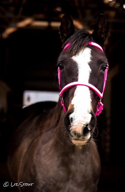 03052017 Q 2 Horse Tack-11