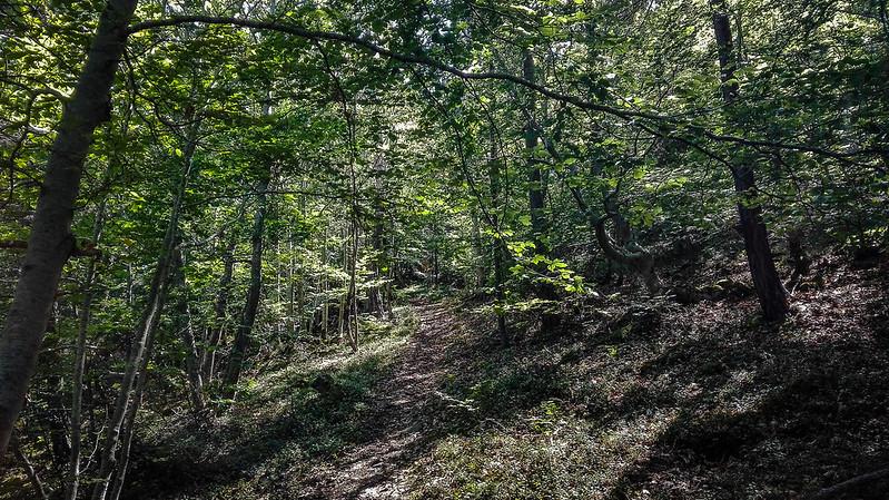 Hayedo yendo al Bosc de Virós