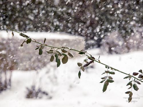 Winter ...