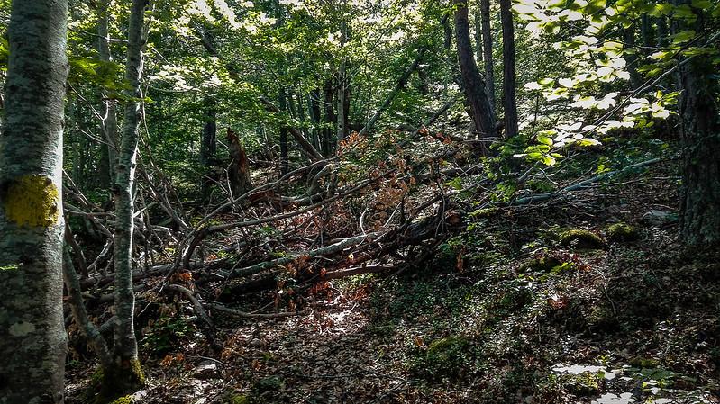 Árboles caidos cortando el camino