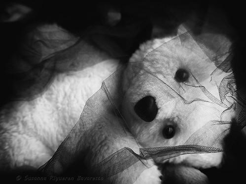 L'orsetto bianco