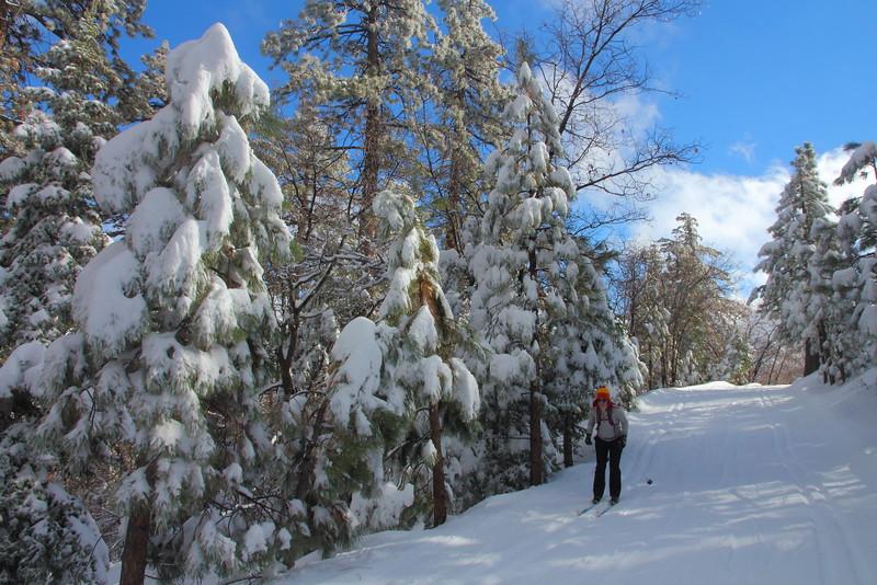 IMG_0474 Vista Trail, Rim Nordic Ski Area