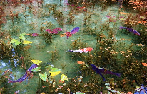 Autumn koi pond lovely koi pond location seki city for Koi pond quezon city