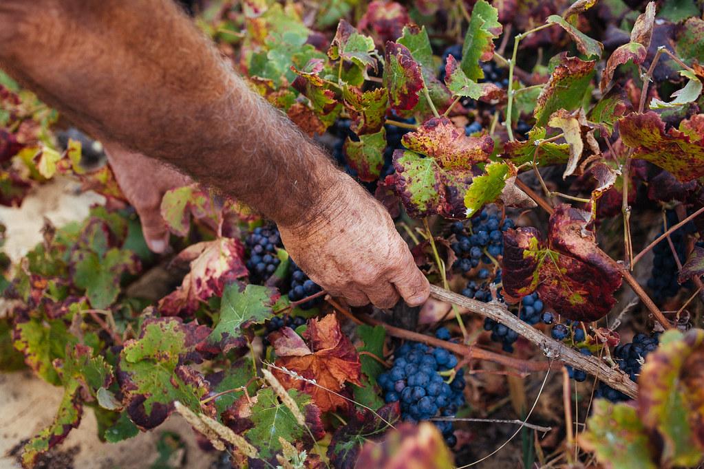 vinhas de colares