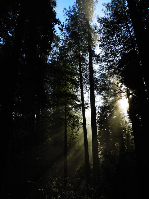 James Irvine Trail, Prairie Creek Redwoods State Park, California, USA