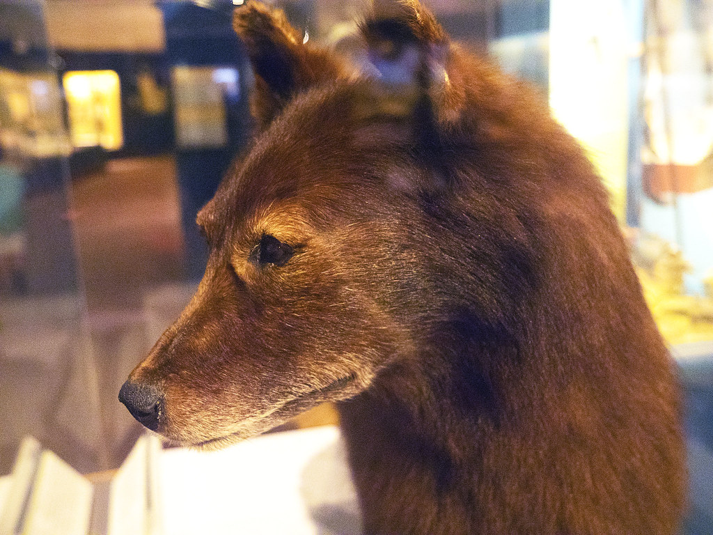Cleveland Museum Of Natural History 08 21 2015 Balto 1