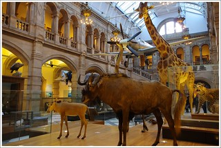 Kelvingrove Art Gallery and Museum | by Ben.Allison36