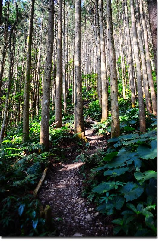 高台山登山步道 2