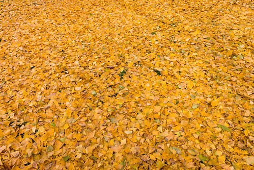 autumn_leaves_2017_08
