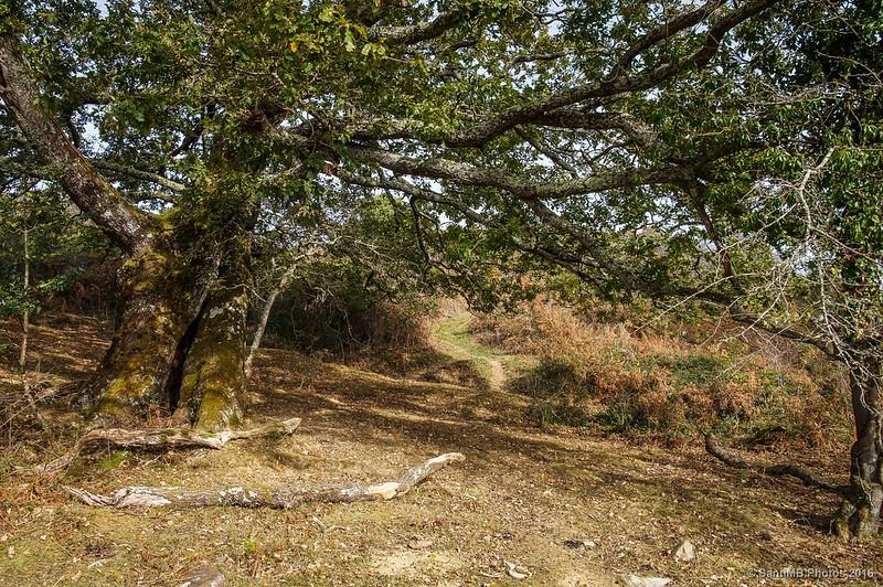 Otro camino que va a la cima del monte Azkar
