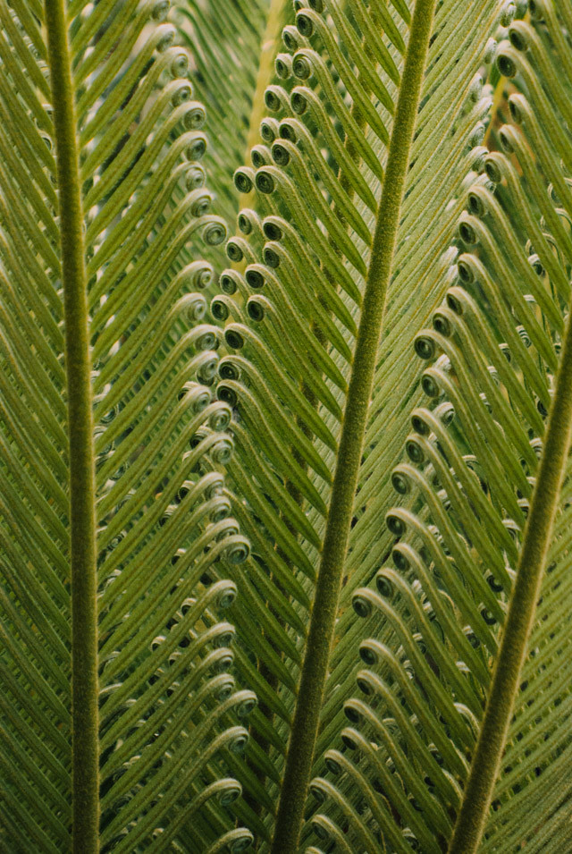 close up of fern