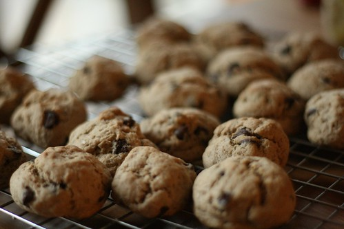 Several dozen light brown chocolate chip cookies on a cooling rack.