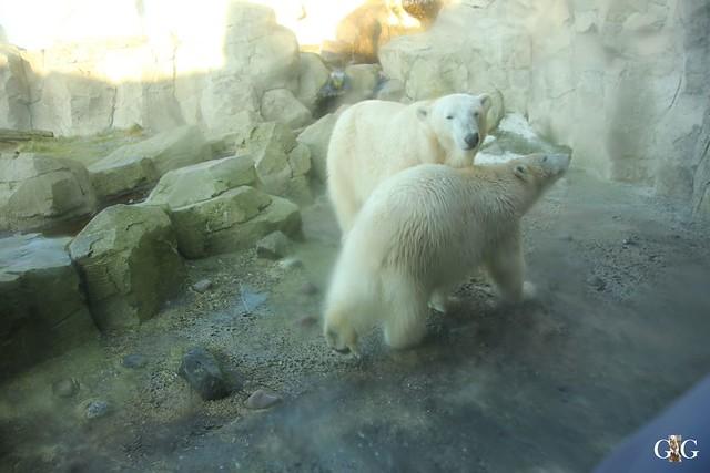 Besuch Zoo am Meer 29.12.20164