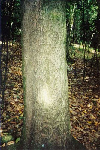 Hierogliphchtms moriori hierogliph or tree carving the