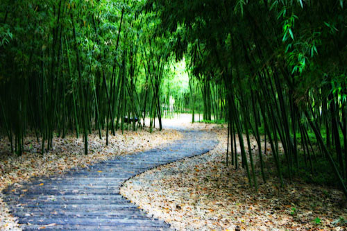 how to get rid of bamboo in the garden