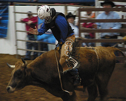 Steer Riding, Cowtown Rodeo, March 2005 | by panopticon