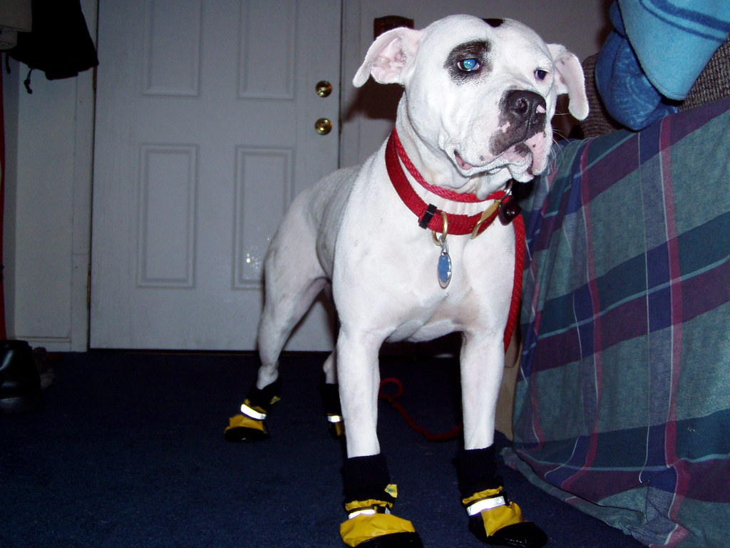 Dog Wearing Shoes Logo