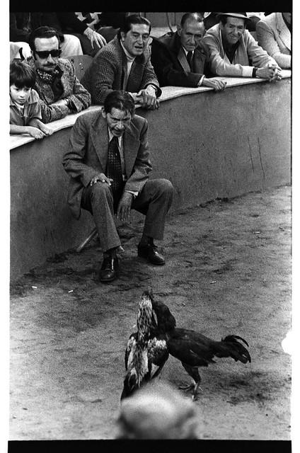 Cockfight, Quito Ecuador | by Marcelo  Montecino