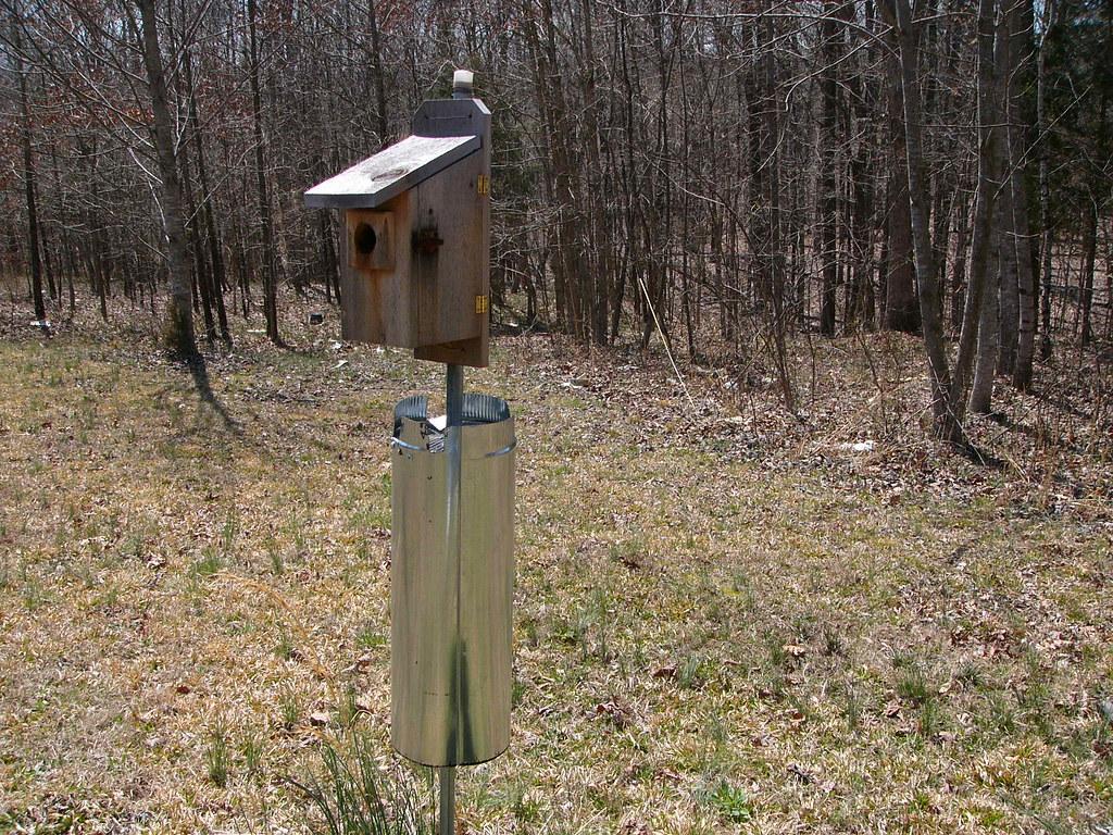 Bluebird Nextbox #1 with predator guard   Last spring, the f ...