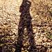 Mi sombra y muchas hojas