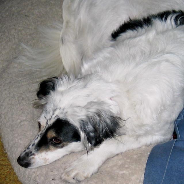 Sadie Cat Dog
