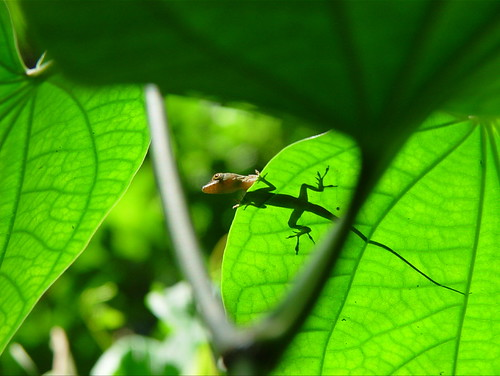 littl' gecko, cast your shadow (old nursery rhyme, | by teddymb
