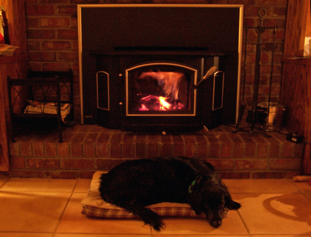 Wood stove dog | Bridget is loving the new wood stove in the… | Flickr
