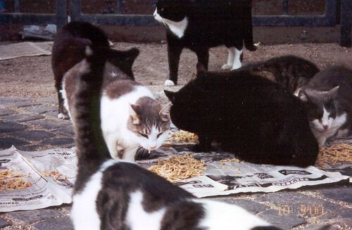 Cats At The Colosseum There Are A Lot Of Stray Cats In