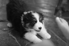 Playful Pepper Puppy | by Norby