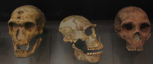neanderthal skulls | by leted