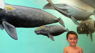 Leo and the Whales | by Tom_Stahl