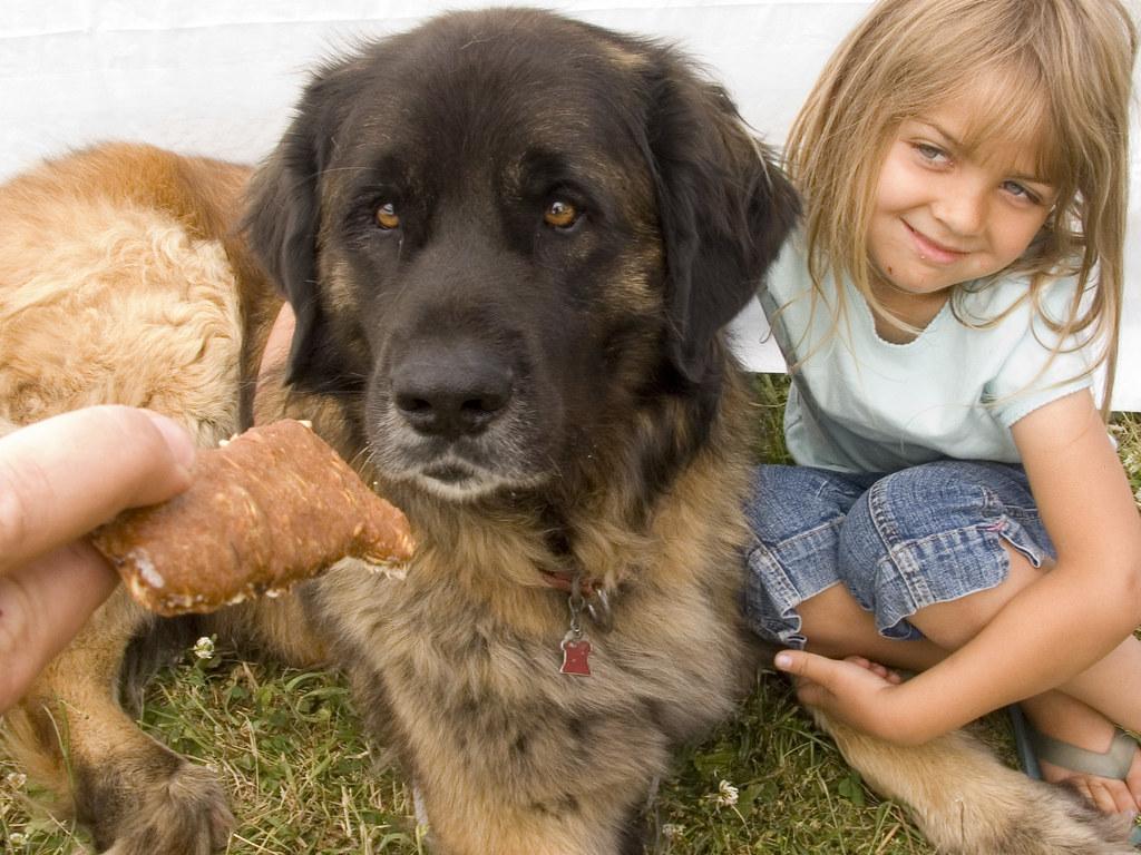 Mobile Bones Dog Supplement For Puppies