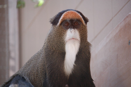Beardy Monkey: Proof That Even The Female Of The Species