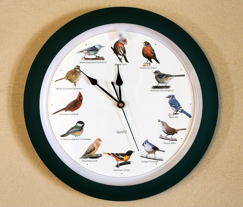 Bird Clock This Clock Is In Our Living Room On The Hour