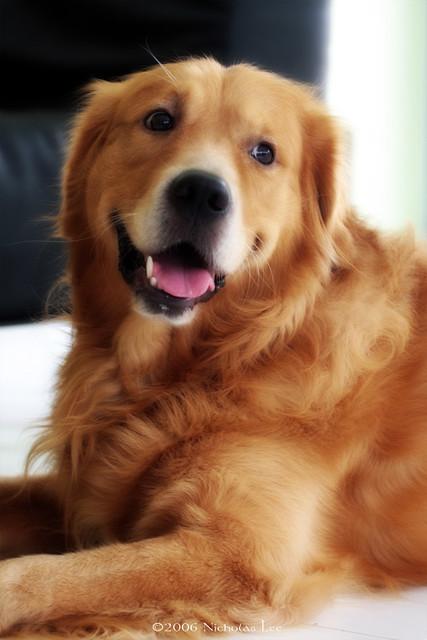 Weekly Dog Boarding Rates Long Term Richardson Tx