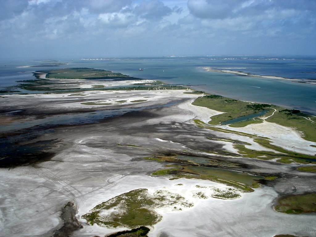 salt marshes a haven for marine life