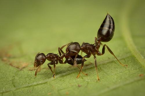 Worker Ant Vs Soldier Ant Soldier Ant Vs Worker ...