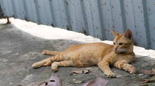 回程的路上看到可愛的貓喵