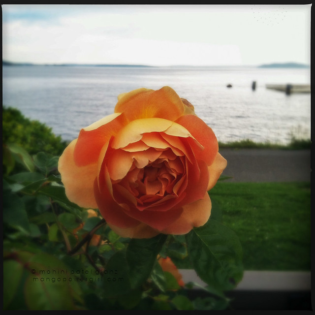 peach rose & elliott bay